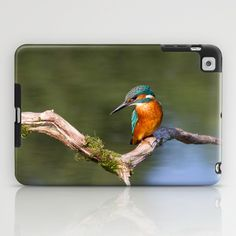 Kingfisher - Alcedo atthis iPad Case
