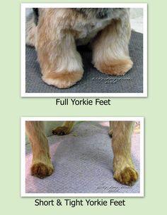 83 Best Yorkshire Terrier Mypetgroomer Co Uk Images In 2018 Dog
