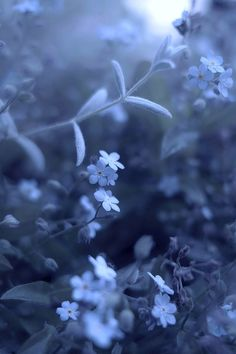 blue night flowers