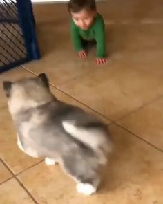 Cutest Baby Dogs Ever; How To Draw Easy Cute Baby Animals case Cute Animals Nicknames Cute Funny Animals, Cute Baby Animals, Funny Dogs, Cute Cats, Animal Babies, Cutest Animals, Cute Animal Videos, Cute Baby Videos, Cute Puppy Videos