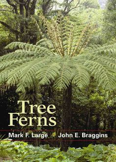 Tree ferns in the landscape command the attention of both devoted gardeners and casual passersby. Their stately form resembles that of the palm tree and evokes a feeling of the quintessentially exotic