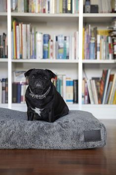NEW! Inspired by the style and simplicity of Bauhaus design, MiaCara's latest drop is a feast for modern pet lovers. Browse the newest MiaCara Dog Beds here: https://www.store.styletails.com/collections/new-arrivals-from-miacara