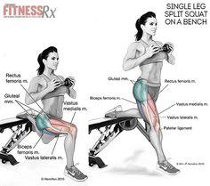 Single Leg Split Squat