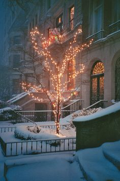 Pretty golden Christmas lights on an outdoor tree surrounded by winter snow.