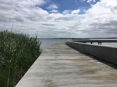 Indvielse af Filsø Ellipsen: Ny mulighed for at opleve vestjysk fuglemekka fra udsigtsbro
