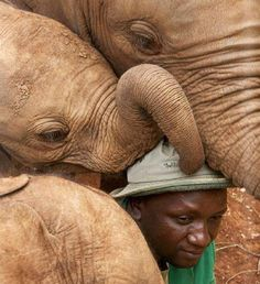 Baby Elephant Adopts a Human and Commemorates the Moment With Sweet Trunk Hug
