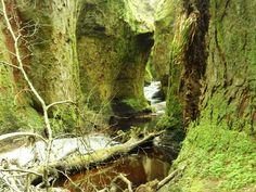 Finnich glen, 2 miles from Queen's view, Drymen side