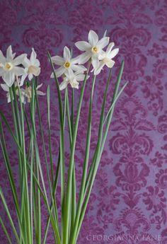 damask & daffodils... Georgianna Lane photography.  #spring #easter