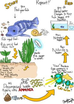 The nitrogen cycle. They added back into the SCOS...oops the NCES as it is called. Looking for creative ways to teach it.