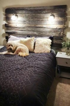 Headboard with lights made from old barn wood. Love the headboard, and the dog is adorable too.