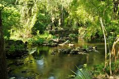 Hillsborough River State Park, Florida #florida