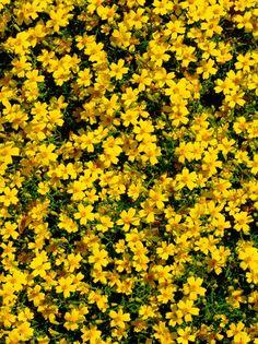die besten 25 full sun flowers ideen auf pinterest voller sonne pflanzen winterharte stauden. Black Bedroom Furniture Sets. Home Design Ideas
