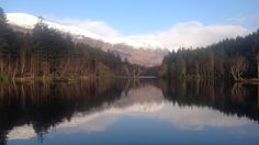 Wini Johnston from Ballachulish took this while walking at Glencoe Lochan, a tract of forest located just north of Glencoe village