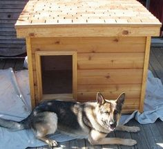 Hardy - WashingtonL  several years of being tried and tested, this dog house has been proven to be the most comfortable and the safest home you can build for your beloved dog.