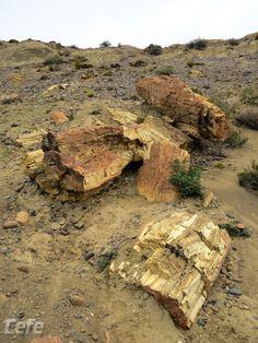 BOSQUE PETRIFICADO - ARGENTINA El sílice aportado al bosque por las erupciones volcánicas convierten, luego de millones de años, la madera en roca. La edad estimada de estos troncos petrificados es de ¡65 millones de años