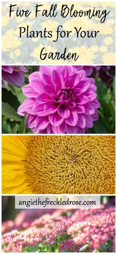Five Fall Blooming Plants for Your Garden | Fall is on the horizon, and it starts to feel like it's time to put your garden to rest. Not so fast! Do I have some ideas for you! There are still some flowers and plants that are the autumn jewels of the garde