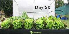 Vegepod Container Gardens give you the best of both worlds and more. You get the size of a raised garden bed with all the benefits of container gardens.