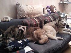 Wieso habe ich bloß keine Couch für mich alleine