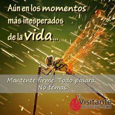 Si has pasado por momentos 'inesperados' en esta #vida,  ¡pídele al #Señor que aumente tu #fe!  #Milagros #Confianza #Dios  #Católico #Iglesia #Prójimo #MensajedelDia