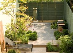 Assymetrical design layout of urban garden in london with slate paving, hardwood deck and pleached trees