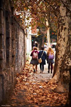 Copaci batrani in mijlocul trotuarului, in drum spre scoala. Trecand pe langa ei nu uitam, oricat de grabiti, sa le atingem scoarta si sa ne invartim in jurul lor (Spring in Autumn by Photo.net photographer Anuar Patjane)