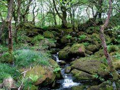 Fairy Falls at Yr Hen Ysgol