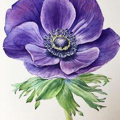 1️⃣0️⃣ Anemone, 2016  #botanicalart_everyday #botanicalart #watercolor