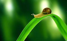 Snail on sail