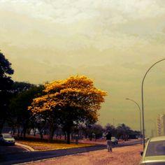 Viver em Brasília