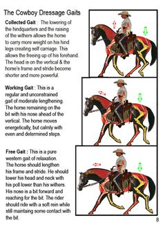 """not sure that this specific to western or dressage. The bottom one """"Free Gait"""" is what we see in Western Classes."""