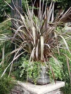 New Zealand flax Get detailed growing information on this plant and hundreds more in BHG's Plant Encyclopedia.