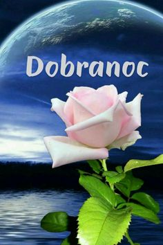 Rose, Flowers, Plants, Outdoor, Polish, Good Night, Baking Soda Cleaning, Outdoors, Pink