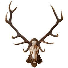 Pair of Elk Antlers Dragon Tattoo Drawing, Tattoo Drawings, Stag Antlers, Antler Art, Antler Drawing, Elk Tattoo, Elk Skull, Antler Tattoos, Library Inspiration