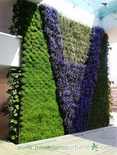 Ecosistema vertical compuesto por 13 muros verdes: dos meses después de la plantación