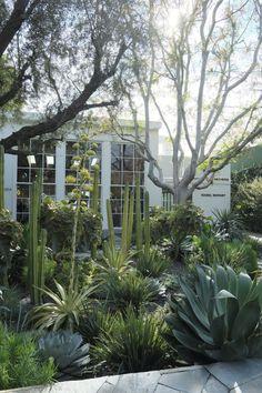 Succulent Landscaping, Tropical Landscaping, Modern Landscaping, Front Yard Landscaping, Front Garden Landscape, Landscape Design, Garden Design, Desert Landscape, Drought Tolerant Garden
