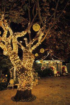 halloween. Maybe  hang multiple pumpkins in this tree (add purple or orange lights) .