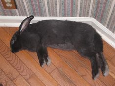 walter melon after a long bunny day  :)