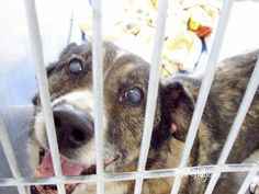 8/27/15 STILL THERE - PLEASE DON´T LET HIM DOWN!!! A4854702 My name is Mickie. I am a very friendly 13 yr old neutered male black/brown Shepherd mix. I came to the shelter as a stray on July 12. available 7/25/15. located in bldg 4 - no public view. — hier: Baldwin Park. https://www.facebook.com/photo.php?fbid=1000198189992018&set=a.705235432821630&type=3&theater