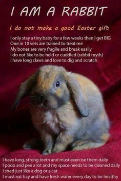I am a rabbit, I am not a good Easter gift. I am not a good pet for children. Buy a stuffed toy instead.
