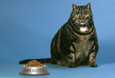Risky Mistakes Pet Owners Make --by WebMD