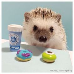 """""""I'm basically useless until I have my morning coffee.""""   A Day In The Adorable Life Of Turbo The Hedgehog"""