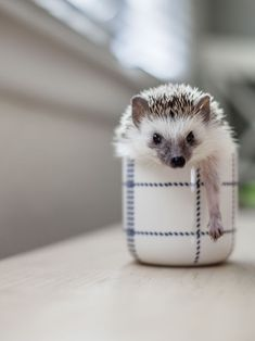 Sublime 24 A cute little hedgehog https://meowlogy.com/2018/02/03/24-cute-little-hedgehog/ Depending upon your tastes, you can elect for the game