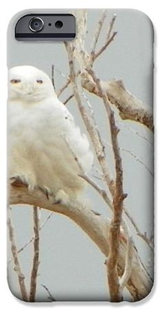 932 D942 Snowy Owl Salisbury Beach State Reservation iPhone Case by ROBIN LEE MCCARTHY PHOTOGRAPHY