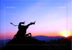 Beetle Lucanus cervus silhouette at sunset...