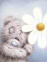 Tatty teddy daisy