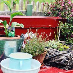Einblicke, Ausblicke und viel zu entdecken gibt es in meinem Garten Planter Pots, House