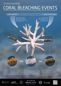 An overview of the causes of coral bleaching