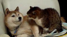 puppy love, mad cat