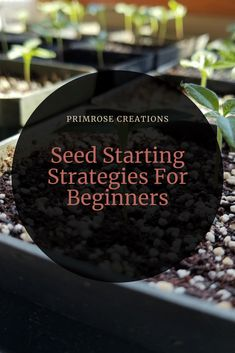 As winter nears, the thoughts of spring loom overhead and seed starting can feel overwhelming. In this post, learn about the importance of your supplies. Simple Garden Designs, Rock Garden Design, Japanese Garden Design, Mediterranean Garden Design, Low Maintenance Garden Design, Growing Sunflowers, Minimalist Garden, Big Garden, Rooftop Garden