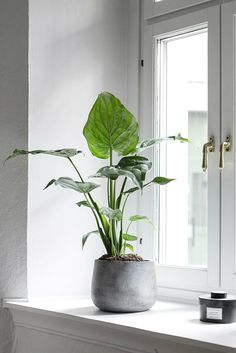 Beautiful Indoor Plants Design in Your Interior Home Bring nature inside with residence plants. Green Plants, Potted Plants, Foliage Plants, Easy Care Indoor Plants, Indoor Plant Pots, Indoor Garden, Home And Garden, Belle Plante, Interior Plants